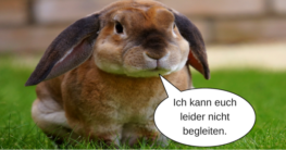 Wohin mit dem Kaninchen im Urlaub?