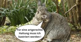 Kaninchen kastrieren lassen