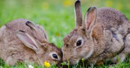 Kaninchen richtig füttern