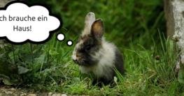 Das wichtigste Kaninchenzubehör