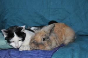 Wie schütze ich meine Kaninchen vor Katzen