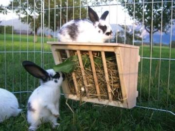 Kerbl Heuraufe für Kaninchen mit Sitzbrett
