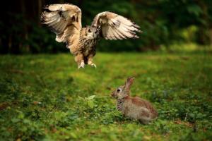 Wie kann ich meine Kaninchen vor Uhus schützen?