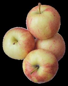 Äpfel für Kaninchen